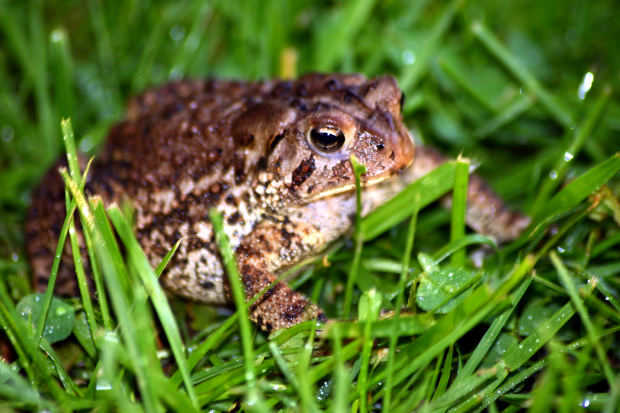 how to get rid of frogs the geek city your questions answered